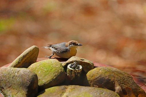 Bird, Wildlife, Brown And Tan, Animal, Tiny, Cute