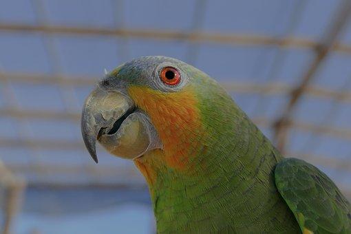 Parrot, Bird, Colorful, Nature, Tropical, Wildlife