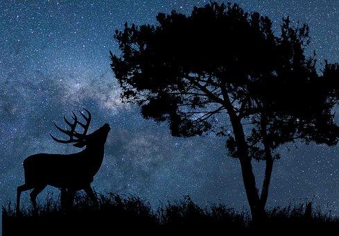 Nature, Sky, Star, Astronomy, Universe, Galaxy, Night