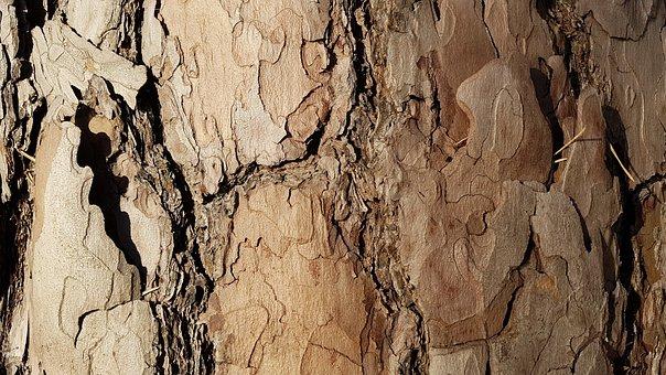 Pine, Bark, Pine Bark, Kieferborke, Close Up, Log, Tree