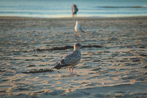 Seagull, Beach, Sea, Sand, Wave, Water, Vacations, Bird