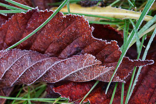 Morning, Frost, Frosty, Winter, Cold, Nature, Landscape