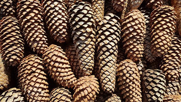 Tap, Pine Cones, Pattern, Spruce, Tree, Conifer, Nature