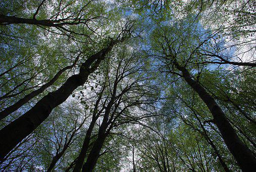 Deciduous Forest, Trees, Sky, Nature, Leaves, Landscape