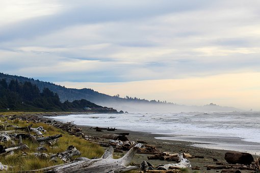 Seascape, Driftwood, Mountains, Cloudy, Coast, Sea