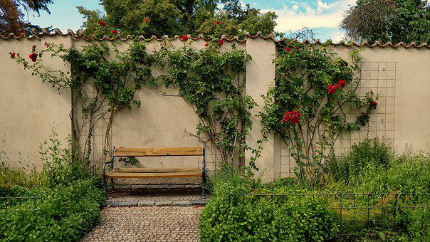 Rose, Bench, Wall, Outdoor, Summer, Flower, Decoration