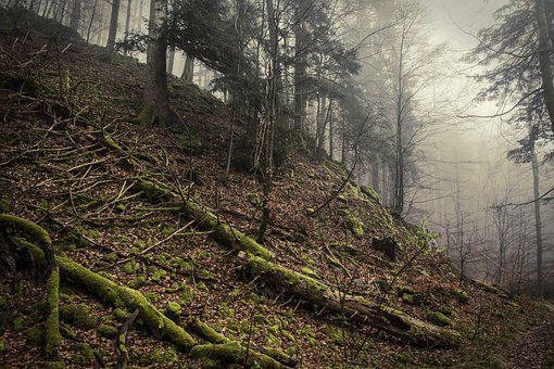 Wehraschlucht, Schwarzwald, Forest, Landscape, Nature