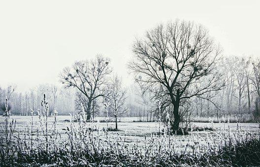 Winter, Tree, Cold, Snow, Frost, Nature, Frozen, Frosty