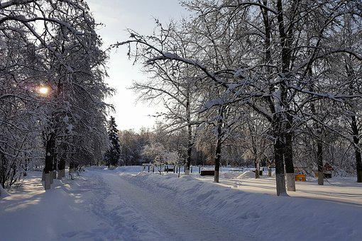 Winter, Snow, Frost, Square, Cold, Trees, Branches