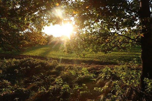Forest, Glade, Sun, Mood, Nature, Landscape, Trees