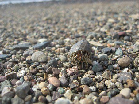 Hermit Crab, Seaside, Crustacean