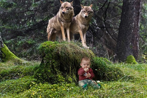 Wolves, Landscape, Child, Grass, Forest, Trees, Gray