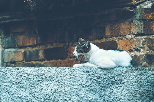 Cat, Feline, Yawn, Animal, Mammal, Cute, Kitten, Lion