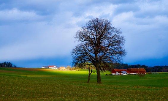 Landscape, Meadow, Tree, Bavaria, Sun, Field, Farmhouse