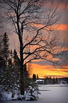 Landscape, Nature, Winter, Trees, Fir, Snow, Ice