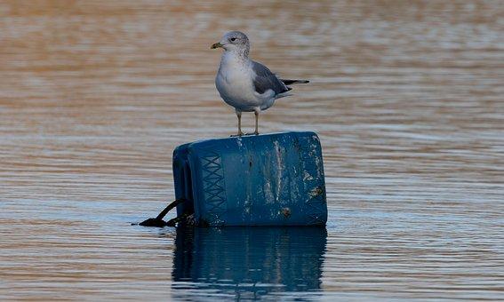 Seagull, Sea Bird, Fishing, Bird, Lake, Perched, Gull