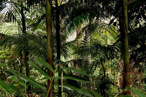 Rain Forest, Forest, Palms, Ferns, Green, Native