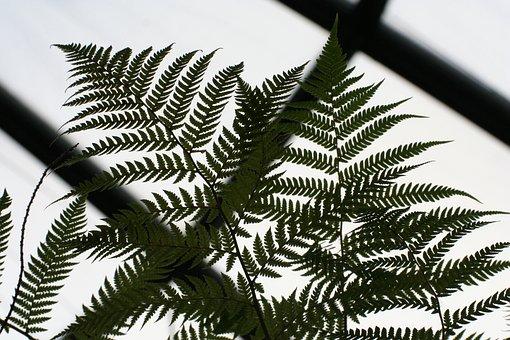 Fern, Forest, Artistic, Design, Magic, Leaf, Reflection