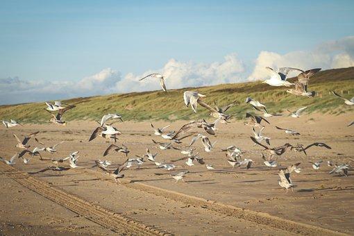 Gulls, Sea, Beach, Sand, Dunes, Birds, Lake, North Sea