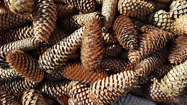 Tap, Pine Cones, Spruce, Tree, Forest, Pattern