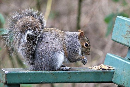 Squirrel, Nature, Bench, Wild, Wildlife, Cute, Fur