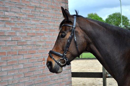 Horse, Head, Animal, Mane, Mare, Stallion, Portrait