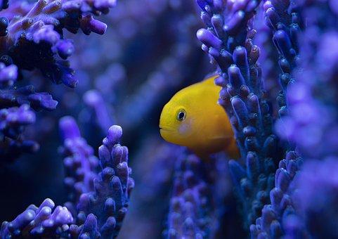 Fish, Blue, Underwater, Water, Marine, Ocean, Sea