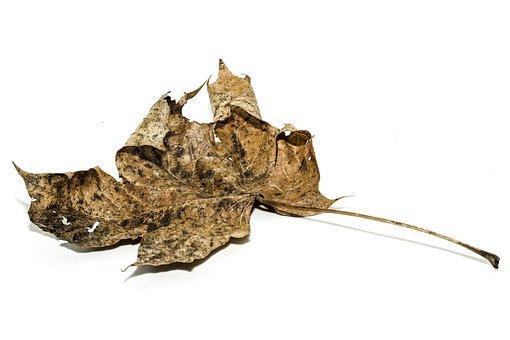 Earth Hour, Leaf, Leaves, Ecology, Seasons, Autumn