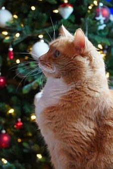 Cat, Cat Friend, Cat Lovers, Fir Tree, Domestic Cat