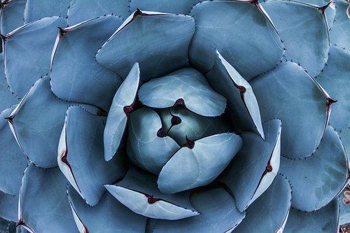 Succulent, Nature, Close Up, Gardening, Cactus, Flower