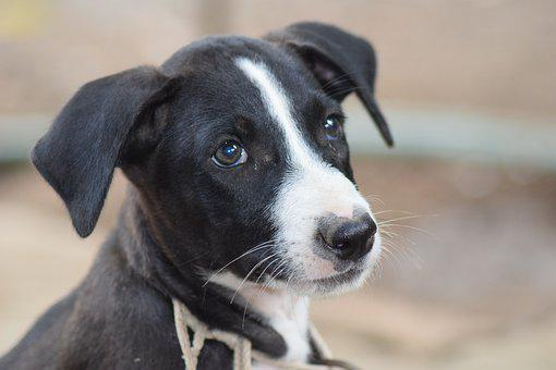 Dog, Black And White, Pet, Love, Cute, Puppy, Animal