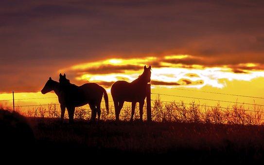 Horses, Horse, Equine, Equestrian, Nature, Cowboy