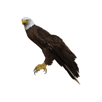 Bald Eagle, Perched, Wings, Feathers, Pretty, 3d