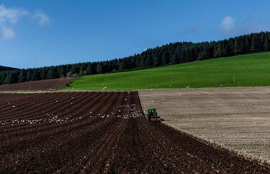 Field, Tractor, Agriculture, Rural, Farm, Farmer