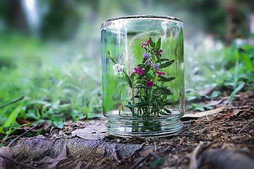 Flora, Flowers, Garden, Bottle, Protect, Blossom