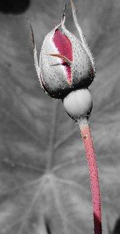 Rose, Green, Flower, Floral, Nature, Spring, Summer