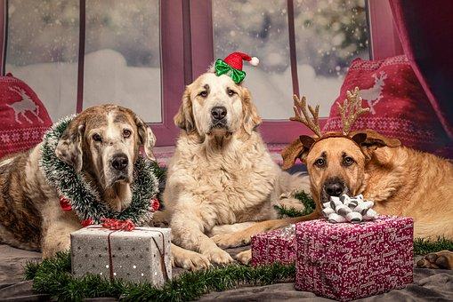 Dog, Christmas, Gifts, Pet, Funny, Santa Hat