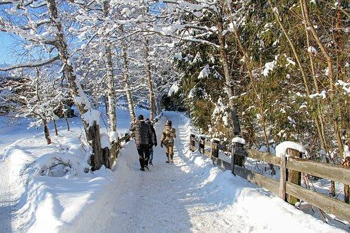 Winter, Snow, White, Landscape, Promenade, People, Go