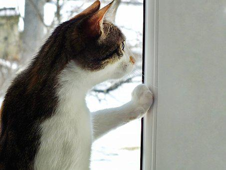 Funny, Cat, Looking, Window, Copy Space, Animals, Home