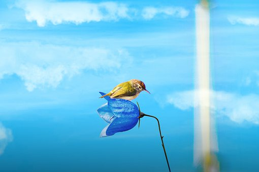 Bird, Nature, Hummingbird, Humming, Wildlife, Flower
