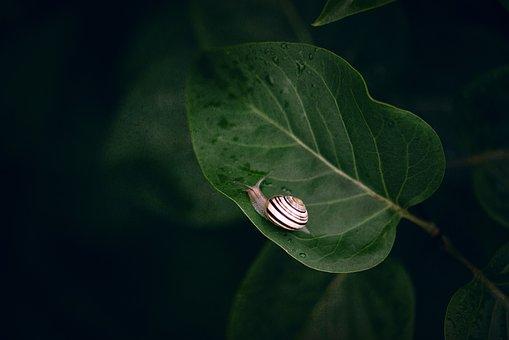 Green Leaf, Little Slug, Nature, Green, Small, Cute