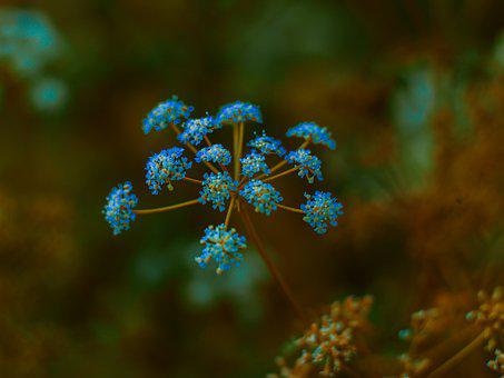Flowers, Nature, Flower, Spring, Supplies, Meadow, Blue