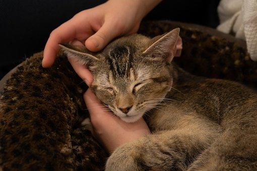 Kitten, Cat, Cute, Pet, Feline, Fur, Portrait, Fluffy
