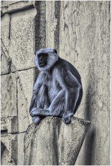 Monkey, Zoo, Climb, Portrait, Hdr, Hanover, Funny