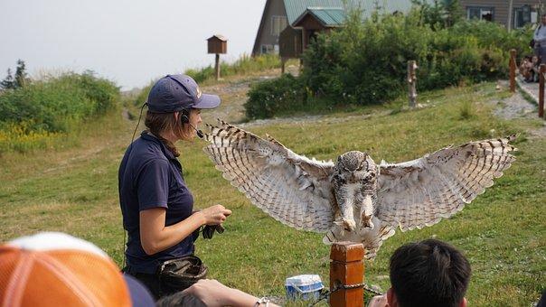 Snowy Owl, Snow Owl, Owl, Bird, Nature, Animal