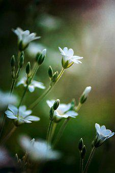 Little Flowers, Nature, Spring, Small, Cute, Outdoors