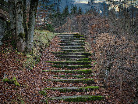 Away, Path, Stairs, Stair Step, Gradually, Autumn