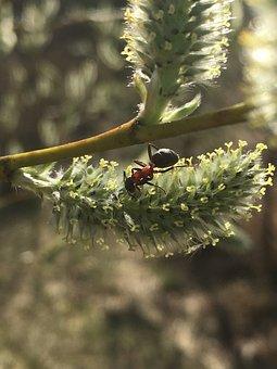 Ant, Willow, Summer, Nature, Spring, Landscape, Bloom