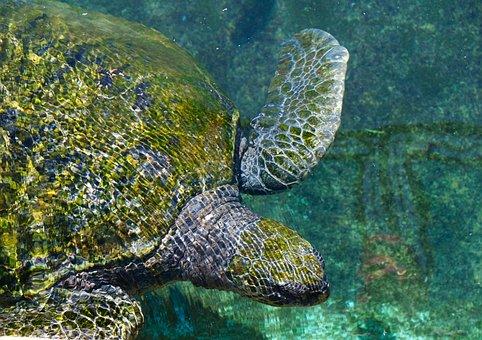 Tortoise, Sea Turtle, Animals, Tropical, Colorful
