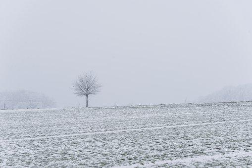 Winter's Day, Cold, Winter, Tree, Snow, Wintry, Nature
